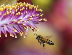 Raw Organic Shungite Honey